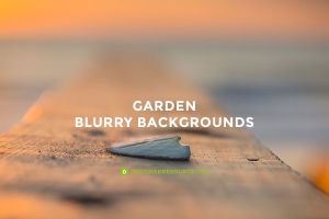 Garden Blurry Backgrounds